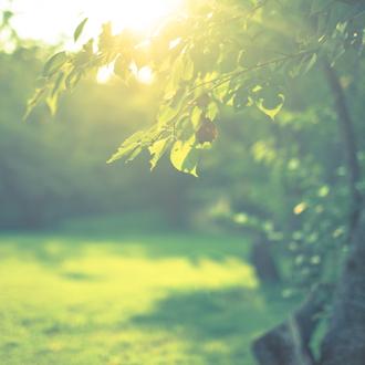 「煌き」高品質スパークリング・ハニーレモンアンバーピアスのイメージ画像3