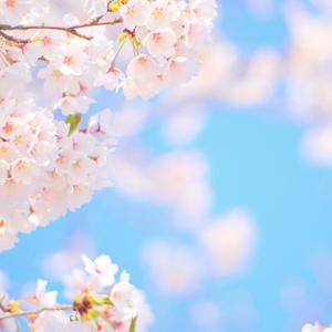 「門出2020~感謝の想いを力に~」ピンク・チューライトブレスレットのイメージ画像3