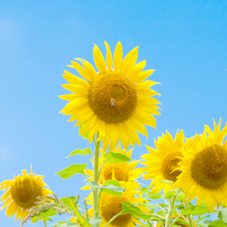 「父の日~ありがとうの花束~」アイドクレーズブレスレットのイメージ画像3