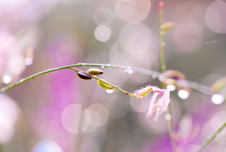 言祝ぎ~ことほぎ~一点もの高品質ハーキマーダイヤモンドネックレスのイメージ画像3