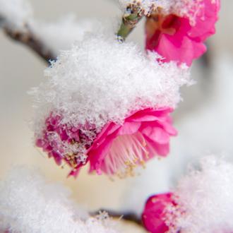 「雪消」高品質ラベンダーアメジストエレスチャルブレスレットのイメージ画像3