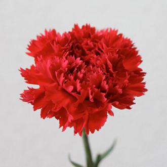 「母の日~ありがとうの花束~」マトリクス・ピンクトルマリンブレスレットのイメージ画像3