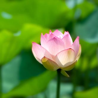 「蓮花」最高級品質ルビーブレスレット(おあつらえ~ルビー~)のイメージ画像3