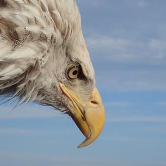 「鷲の眼」最高級品質イーグルアイ・天眼石ブレスレット(御あつらえ~イーグルアイ~)のイメージ画像3