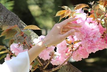 「花咲か」特選ルビーブレスレットのイメージ画像9