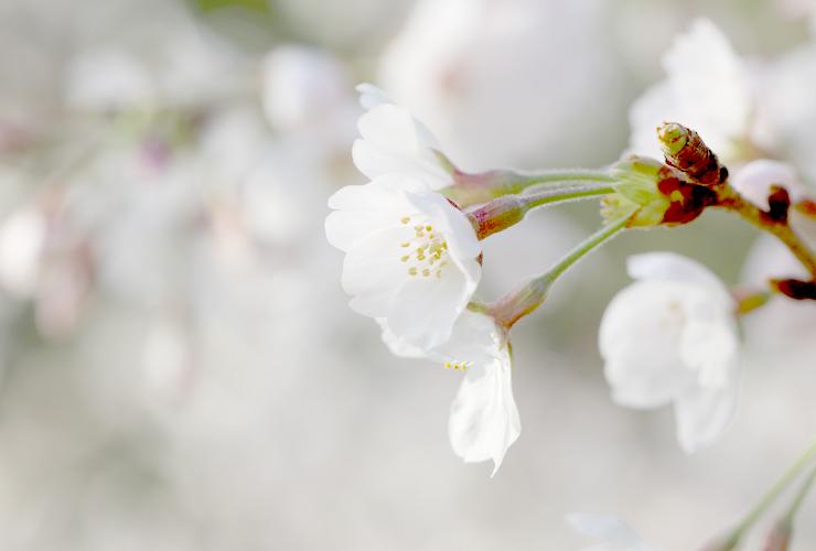 「秘め」高品質ピンクトルマリンピアス・イヤリングのイメージ画像3