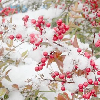 「雪うさぎ」高品質ホワイト・ラビットヘア・クォーツブレスレットのイメージ画像3