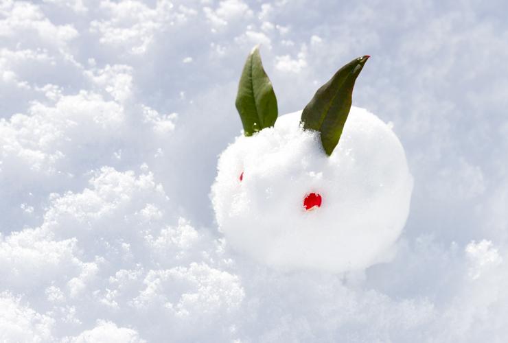 雪うさぎとは