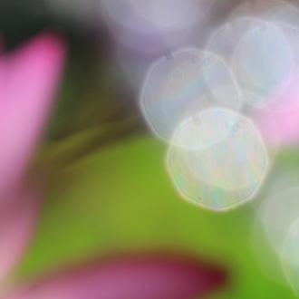 「太極」高品質マゼンタ・チューライトブレスレットのイメージ画像3