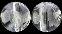 虎と竹 彫り水晶(8mm)