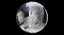 白虎 彫り水晶(8mm)
